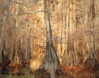 Lake House Photography Bayou Water Photos Red Moss 8x10 Trees Swamp Lake Photo Water Red Tree Louisiana Bayous and Swamps Cabin Art 11