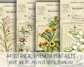 A4 Botanical Ephemera Digital Collage Sheet Download -1049- Digital Paper - Instant Download Printables