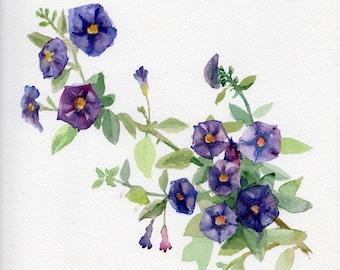 Purple flowers, original painting, solanum rantonnetii, flower bush, blue, purple wall decor