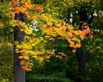 Bright yellow colors of autumn, real autumn photo, yellow leaves, bright autumn, print you can frame for your wall