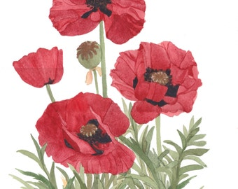 Red Poppiies Original Watercolor Painting 11x15 by Wanda's Watercolors