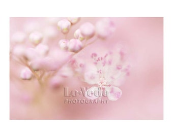 Cotton Candy Flowers, Pink Nursery Art, Baby Girls, Girl's Room Decor, Nature Photography, Flower Photography