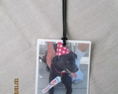 YOUR PET photo luggage tag