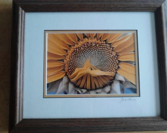 Framed Sunflower Photograph  by John Lore