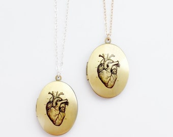 Anatomical Heart Locket Necklace - Sterling Silver or 14k Gold Filled Chain