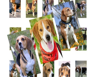 Beagles 1x2inch Domino Images Digital Collage 033