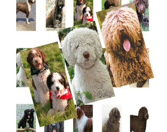 Spanish Waterdogs 1x2inch Domino Images Digital Collage 069