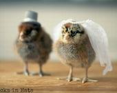 Photo Print 8x10 Two Chicks Bridal Veil Wedding Hat Photograph