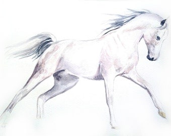 Watercolor painting Riding white horse, animal illustration
