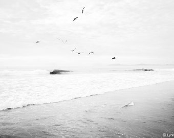"Black and White Photography - black and white seascape of birds over the Pacific ocean, beach wall print, home decor, beach photo - ""Accent"""