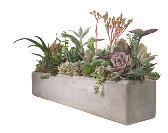 Succulent mix in a white square ceramic pot dish garden - Rectangular succulent planter ...