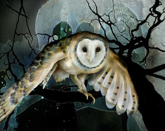 Barn Owl 11 signed fine art print 8x10, Owls, Barn owls, Bird lover gift, Bird prints