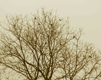 Photo Print - Birds in Bare Tree with Yellow Tint