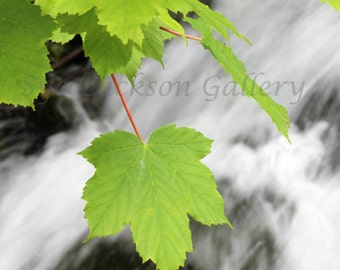 River Photography, White Water, Leaf Fine Art Photography