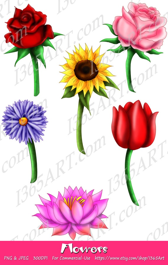 Beautifully Detailed Flowers Clipart 6 Red Rose, Pink Rose ...