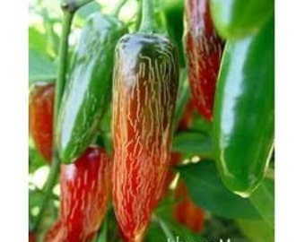 Organic Jalapeno Hot Pepper Seeds ~Mycorrhizae Fortified/Bulk Available~