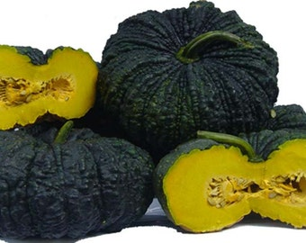 Thai Toad pumpkin 30 seeds 10 seeds Rare heirloom vegetable