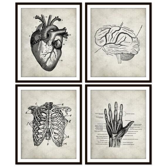 Vintage Heart Anatomy Art Print Rib Cage Brain Hand