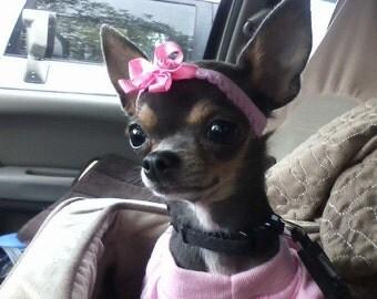 Chihuahua Headband