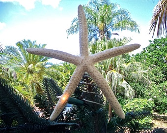Starfish Christmas Tree Topper. Starfish have a light sparkle dusting.  Looks perfect with all of our beach ornaments!