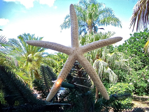 Starfish Christmas Tree Topper. Starfish Have By