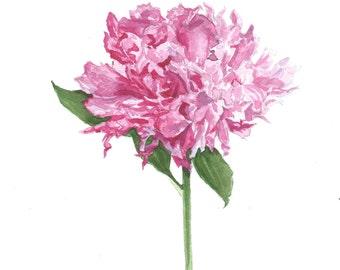 Watercolor Pink Peony Flower Art