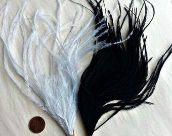 Feathers 100 Thin Ostrich feathers in black or white, feathers, black feathers, white feathers