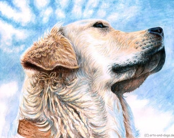 Golden Retriever Sky - Fine Art Print