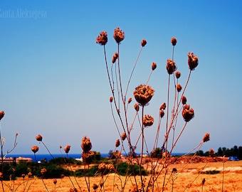 Mediterranean Scenery - Cyprus  - Fine Art, Nature Photography, summer, Print 8x12, Wall decor