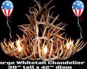 Texas Whitetail dear antler chandelier