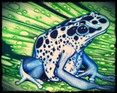 "Poison Dart- 9x12"" Museum Quality Frog Print Limited Edition Run Of 350"