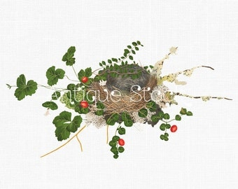 Clipart Bird's Nest with Vines Vintage Illustration for Digital Scrapbooking, Collages, Photoshop, Picmonkey, Illustrator, Crafts, Prints...