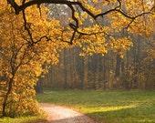 Fall Autumn Photography, Nature Art, Landscape, Wall Decor