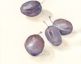 Purple Plums watercolor drawing ORIGINAL pencil and watercolor fruits drawing. Botanical art by Catalina S.A
