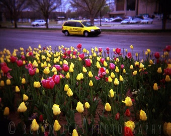 """50% OFF SALE - Pink and Yellow Tulips with Taxi Loose Fine Art Photographic Print, Lomography Holga Film, Oklahoma City, 12""""x12"""" or 5""""x5"""""""