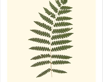 Pressed Cinnamon Fern Original Botanical Print