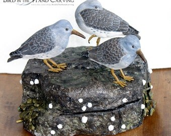 Goup of 3 Purple Sandpipers with Rockweeed and Barnacles- Decorative Life Sized Carving