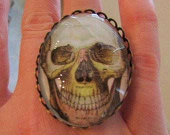 Skull Adjustable Brass Oval Ring Under Polished Glass