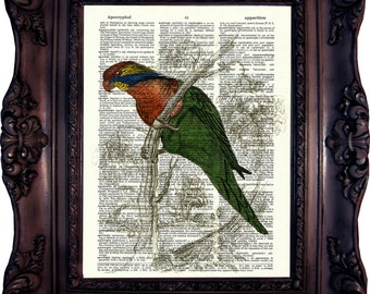 Parrot Dictionary art print. Vintage Art Print. Print on Book Page. Parrot from Natural History. 19. century. Dictionary print. Code:383