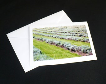 Lavender Field Photo Greeting Card White 6.5 x 5 All Occasion Blank Calm Zen Tranquil Birthday Anniversary Shower Thank You Gift Card