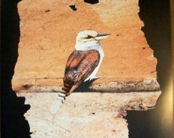 Laughing Kookaburra, Large Limited Edition Print out of 800
