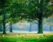 Morning Tea - Landscape Photography - Nature, Trees, Green, Foliage - Autumn - Mist
