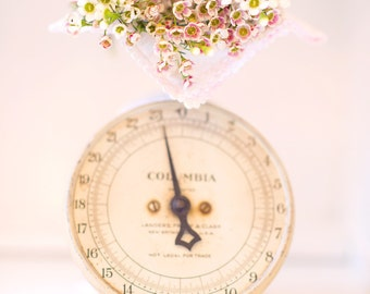 Dainty Flowers dreamy photography 5x7 pink pastel shabby cottage romantic home decor wall art photography print
