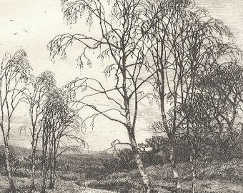Birch Trees by Frederick Slocombe Lovely Etching 1800s Victorian Era Antique Art Print [Inv#LndEth 11
