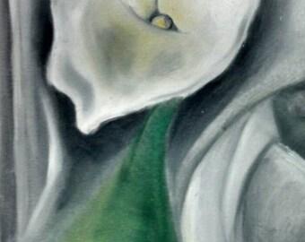 Calla Lilies, oil on canvas, 16x20