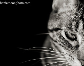 Cat Photography, Picture of Cat, Tabby Cat Photograph, Black and White, Feline Art