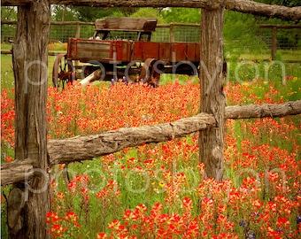 Wagon in Paintbrush -Texas Wild Flowers Landscape- signed original photograph - Award Winner