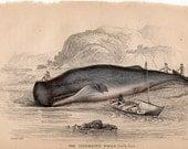 1861 antique SPERM WHALE ENGRAVING original antique sea life ocean print - sperm whaling no 2