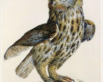 Owl Art Print Book Plate SALE Buy 3, get 1 FREE