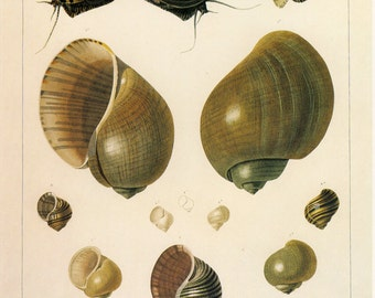 Vintage Book Plate Shell, Buy 5, get 1 FREE